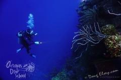Roatan2017_Dive6_Pillar_Coral_DougElseyPhoto_045