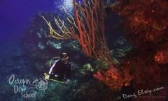 Roatan2017_Dive6_Pillar_Coral_DougElseyPhoto_133