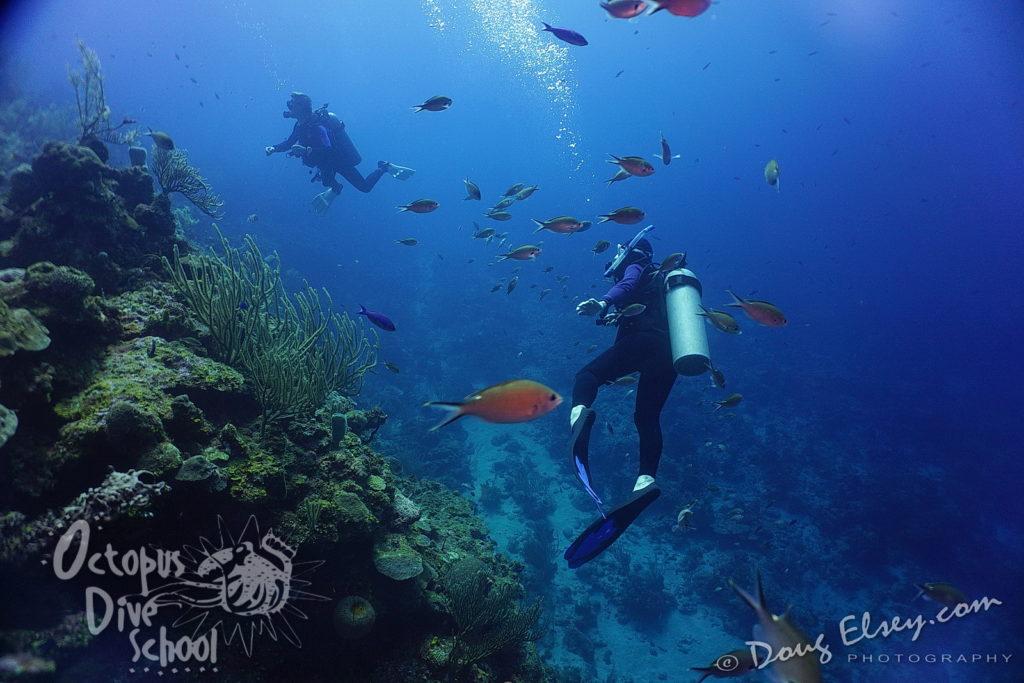 Roatan2017_Dive3_DougElseyPhoto_107-1024x683.jpg