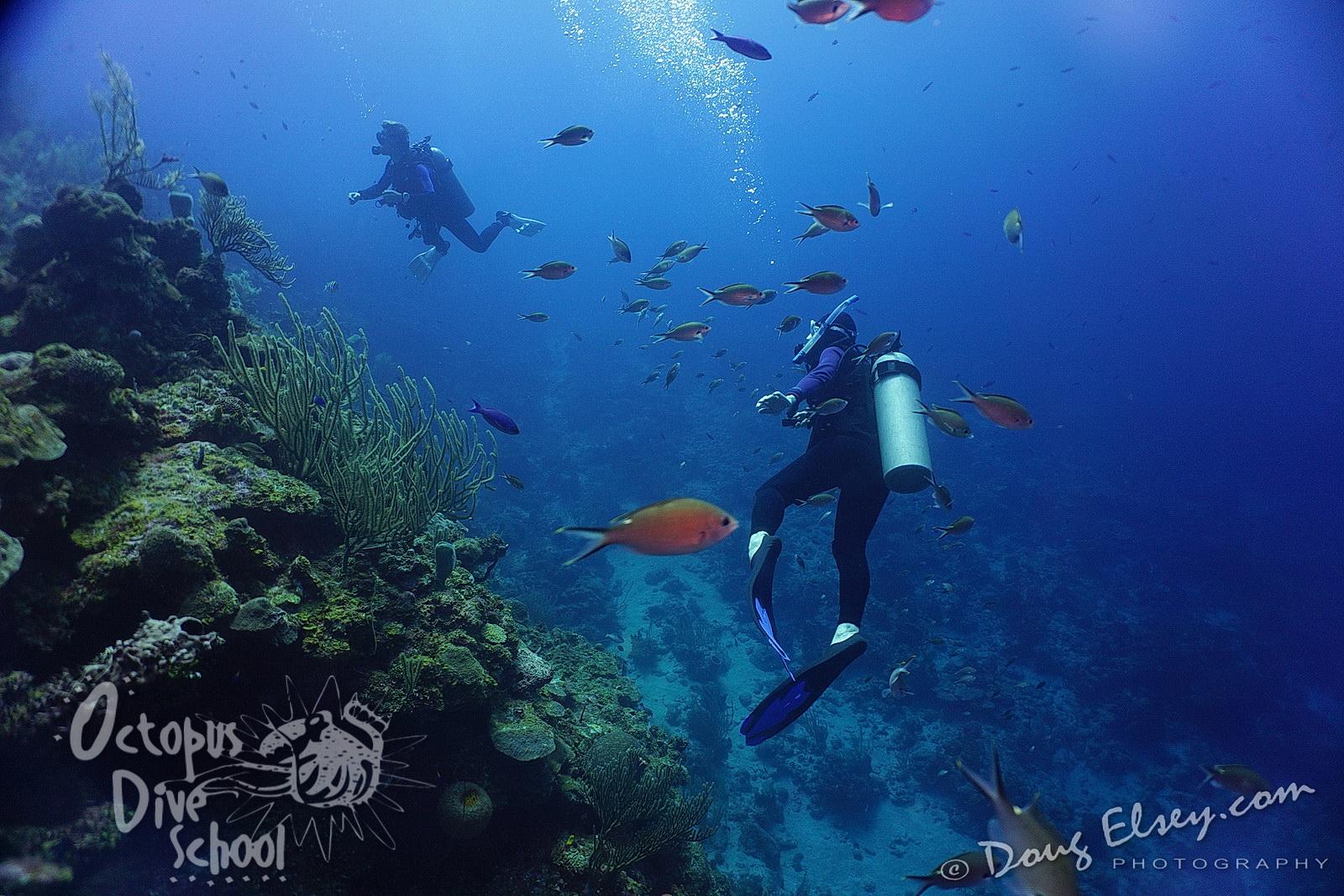 Deep blue diving thick mature porn - Dive deep blue ...